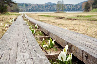 尾瀬国立公園 春
