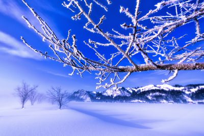 魚野川 霧氷