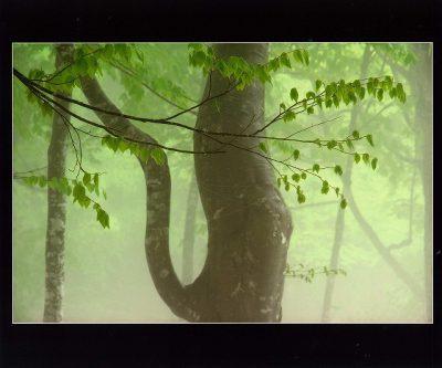 第8回【四季「春」賞】新緑の森