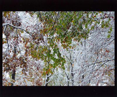 第8回【四季「秋」賞】初雪の頃