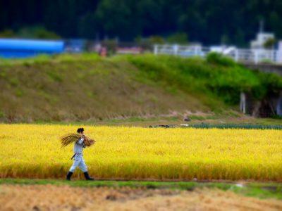 第10回【銀賞】収穫