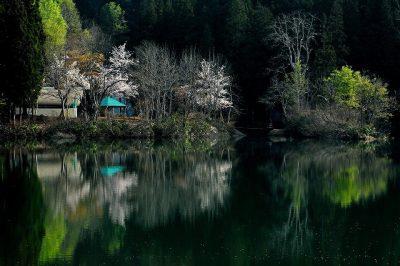 第10回【小出郷新聞社賞】緑水湧く