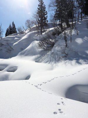 第13回【入賞】雪山散歩