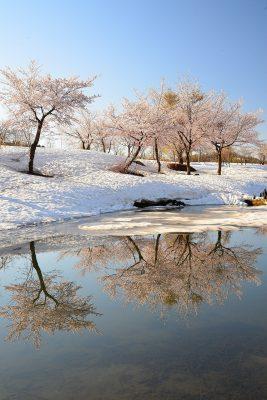 第14回【四季「春」賞】朝の輝き