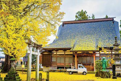 第14回【四季「秋」賞】不動院の大銀杏