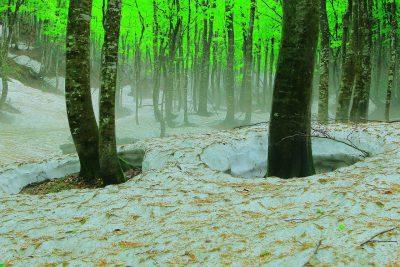 第15回【四季「春」賞】新緑の頃