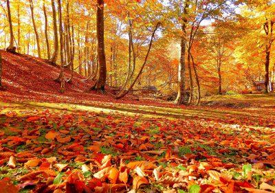 第15回【四季「秋」賞】秋色の中で
