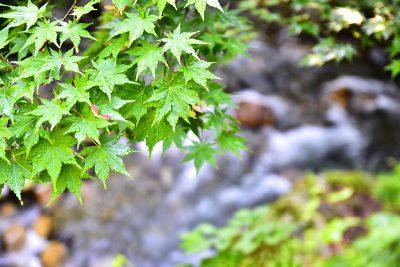 ほそど渓谷 グリーンシーズン