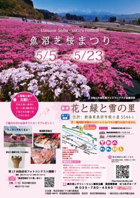 魚沼芝桜まつりチラシ