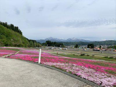 20210510芝桜