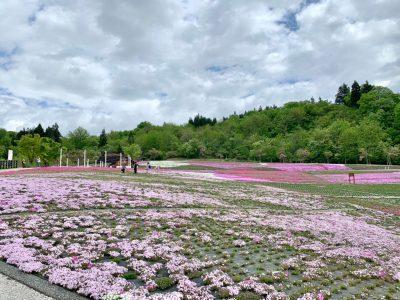 20210511芝桜