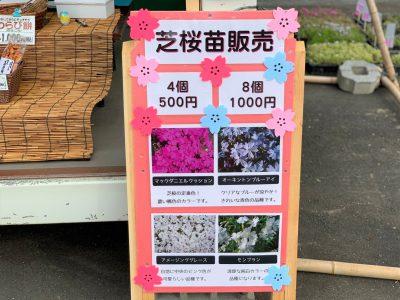 20210513芝桜