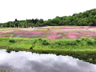 20210523芝桜