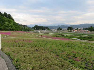 20210525芝桜