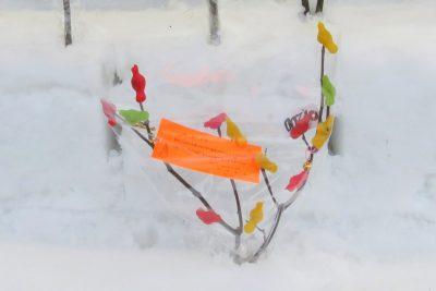 雪中花水祝