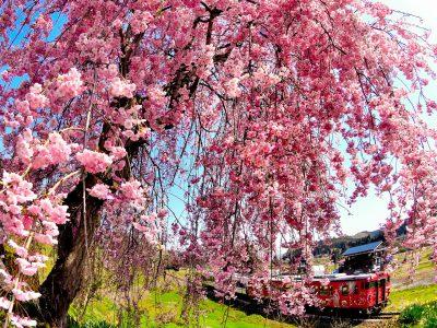 第16回【四季「春」賞】小春日和