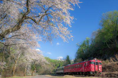 第17回【JR只見線大賞】待ち焦がれた桜