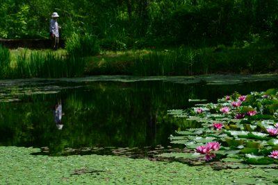 大白川地区の【モネの池】